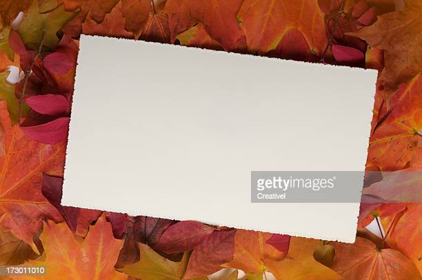 Blank card on fall leaves, Just add your text