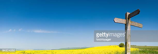 Blank sign, yellow crop, blue sky