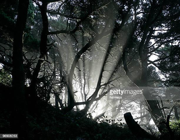 Blast of light in a dark forest