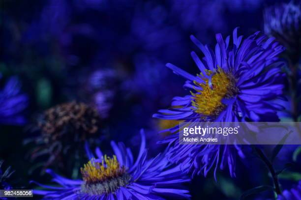 Blau im Herbst