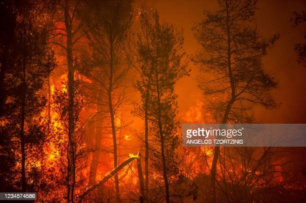 Blaze engulfs trees in its path as forest fires approach the village of Pefki on Evia island, Greece's second largest island, on August 8, 2021. -...