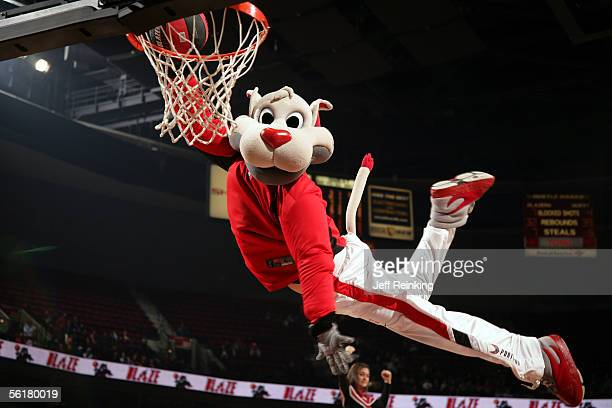 Blaze the mascot of the Portland Trail Blazers dunks the ball during a break in the game against the New York Knicks on November 9 2005 at the Rose...