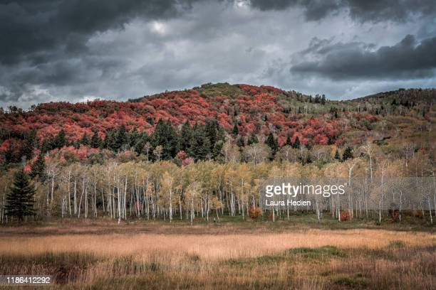 blazing fall colors in the us - laura woods stock pictures, royalty-free photos & images