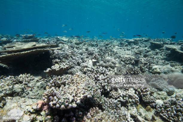bleached, broken and dead coral reefs in shallow water - dead stock pictures, royalty-free photos & images