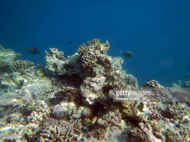Bleached Coral Reef Of Maldivian Island