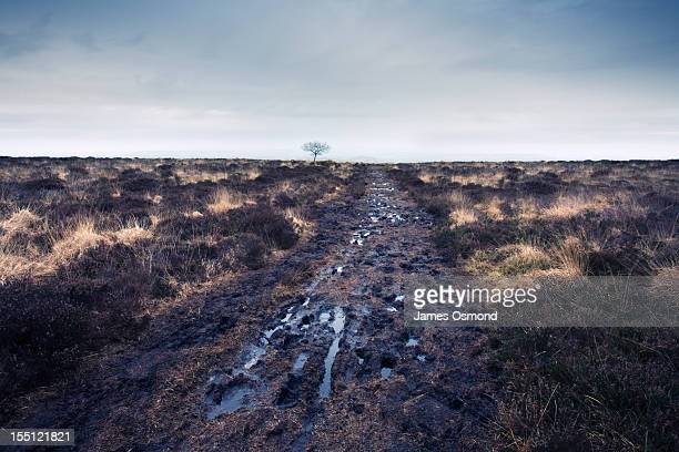 bleak landscape - country road stock pictures, royalty-free photos & images