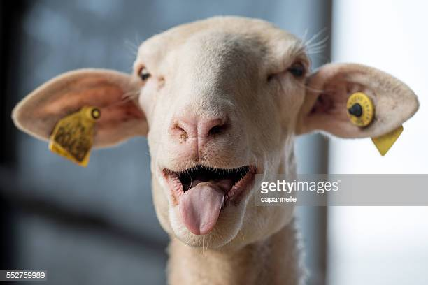 Bleating