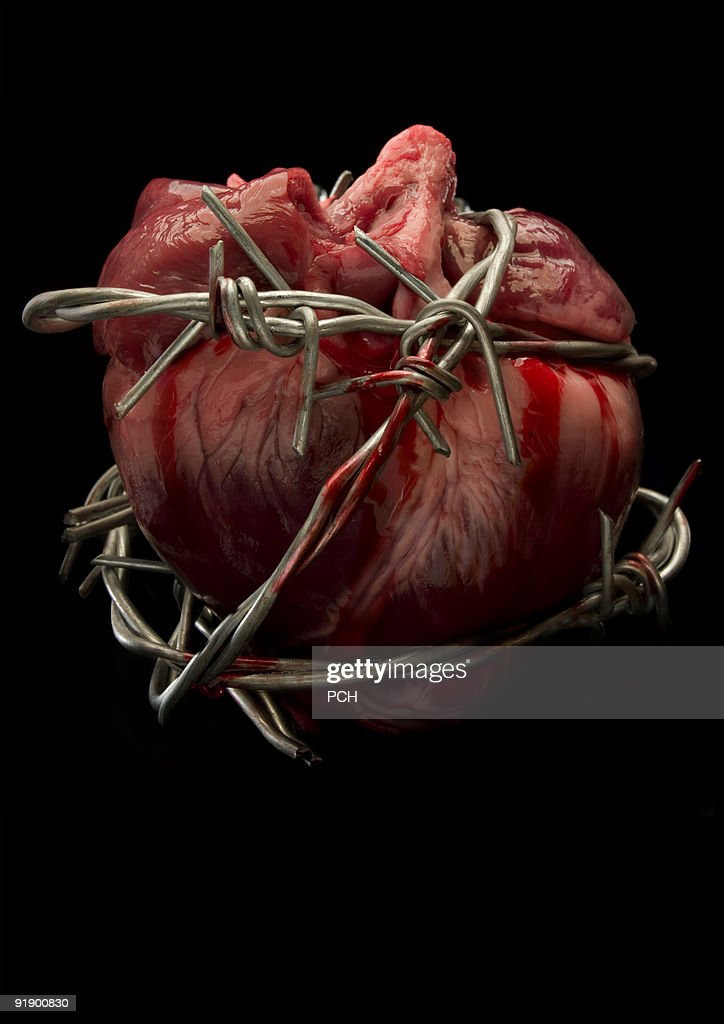 Bleeding heart  : Stock Photo