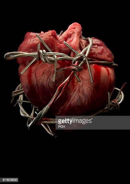 bleeding heart  - barbed wire stock pictures, royalty-free photos & images