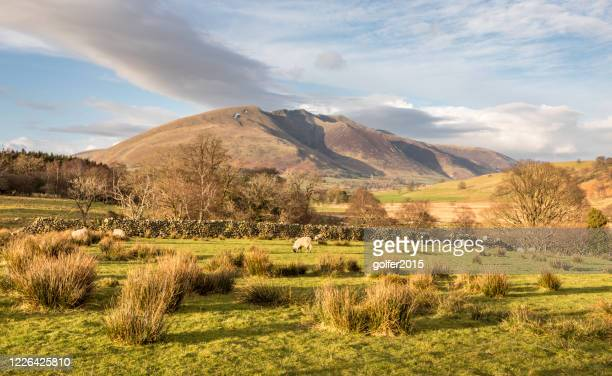 blencathra - lake district - england - hill stock pictures, royalty-free photos & images