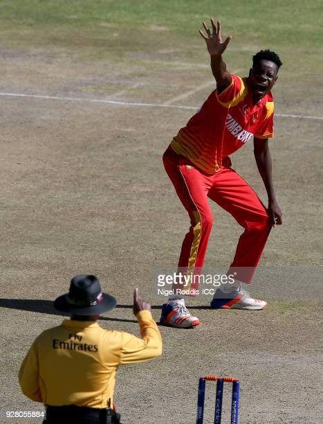 Blessing Muzarabani of Zimbabwe celebrates taking the wicket of Rahmat Shah of Afghanistan during the ICC Cricket World Cup Qualifier between...