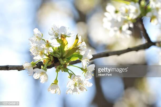 blühende natur - natur photos et images de collection