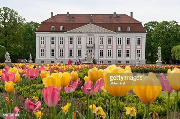 Blühende Tulpen vorwiegend in gelb und rot bestimmen derzeit das Bild im Park des Schlosses Friedrichsfelde im Tierpark Berlin Das Schloss wurde 1695...
