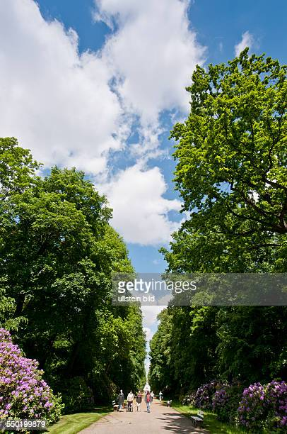Blühender Rhododendron im Tierpark BerlinFriedrichsfelde Der Schlosspark wurde im Jahr 1821 durch Peter Joseph Lenné zum Landschaftspark umgestaltet