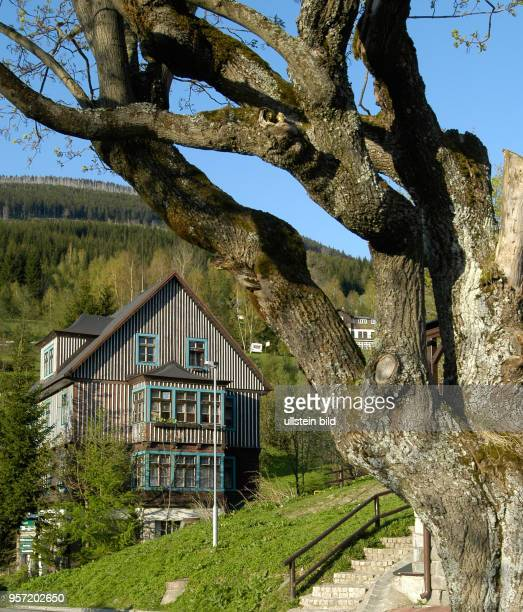 Blick am auf ein typisches altes Holzhaus im beliebten Erholungsort Spindleruv Mlyn an der Elbe im tschechischen Riesengebirge Das Riesengebirge in...