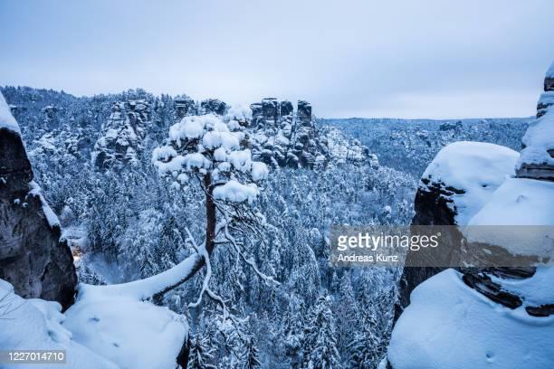 blick auf kleinen baum mit felsen im winter in sächsischer schweiz bei bastei in lohmen in deutschland - baum stock pictures, royalty-free photos & images