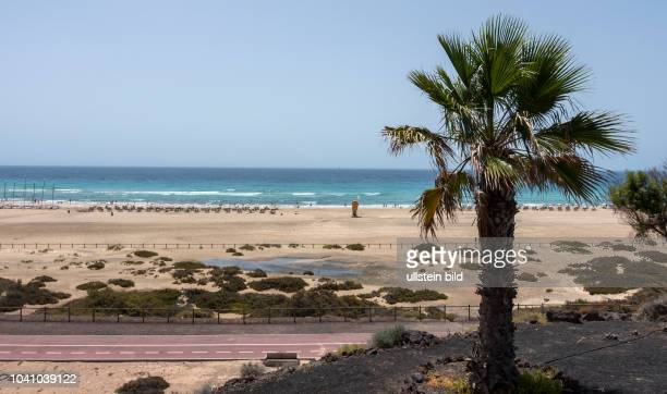 Blick auf Sonnenschirme und Liegen in der Naehe von Morro Jable auf der kanarischen Insel Fuerteventura in Spanien