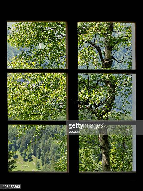 blick durch ein fenster in die natur - natur stock pictures, royalty-free photos & images