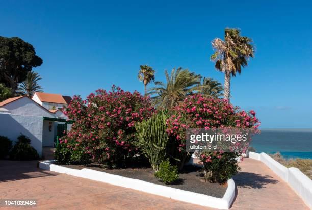 Blick in die Bungalowanlage im Clubhotel Aldiana vor deren renovierung in der Naehe von Morro Jable auf der kanarischen Insel Fuerteventura in...