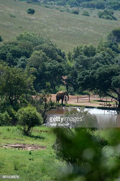 Blick von Glen Afric Country Lodge auf Elefant am Wasser Hartbeespoort bei Pretoria Südafrika Afrika Tier Reise BB DIG PNr 240/2006