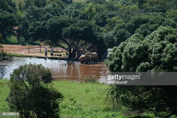 Blick von Glen Afric Country Lodge auf Elefanten am Wasser Hartbeespoort bei Pretoria Südafrika Afrika Tier Reise BB DIG PNr 240/2006