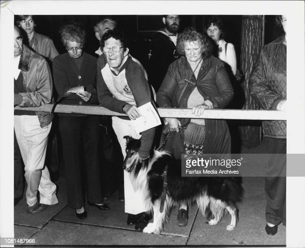 Blind dog at Anzac day dawn service April 25 1984