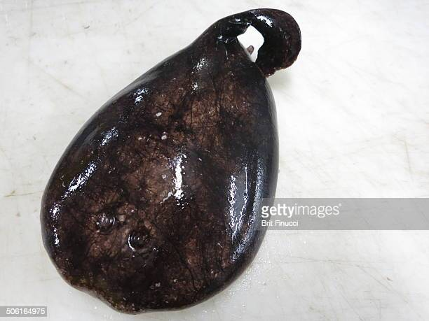 Blind Electric Ray
