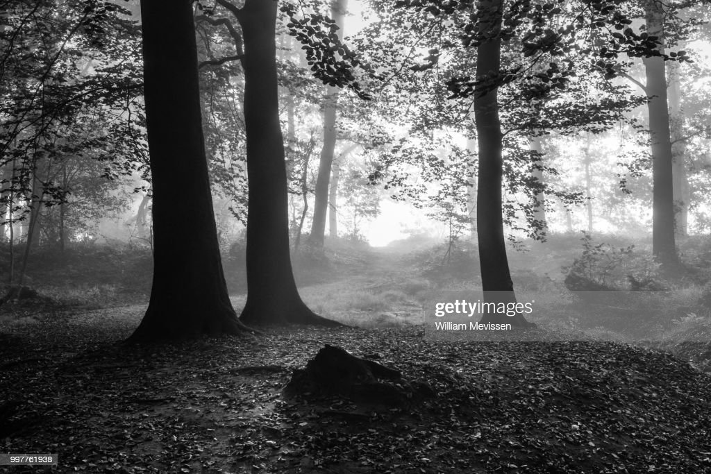 Blinding Fog Silhouettes : Stockfoto