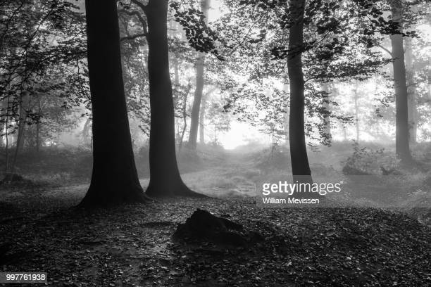 blinding fog silhouettes - william mevissen stockfoto's en -beelden