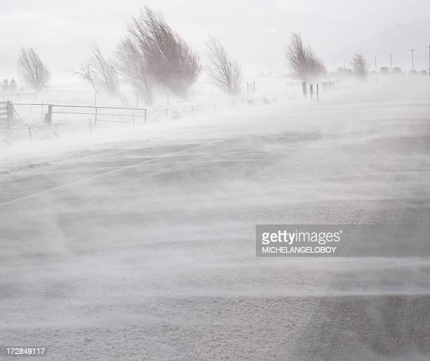 blinding snow - snow storm stock pictures, royalty-free photos & images