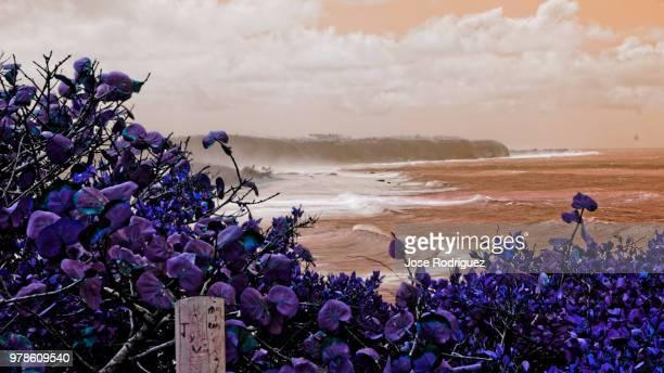 blindness & sunset - paisajes de puerto rico fotografías e imágenes de stock