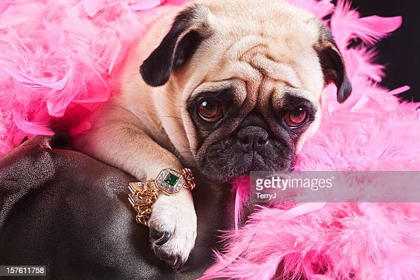 bling - bling bling stock pictures, royalty-free photos & images
