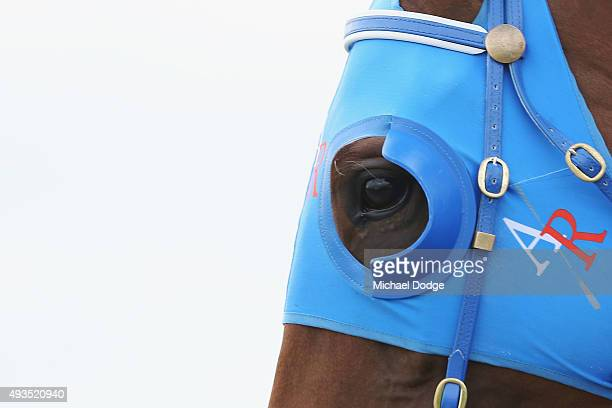 Blinkers are seen on a horse during Geelong Cup Day at Geelong Racecourse on October 21 2015 in Melbourne Australia