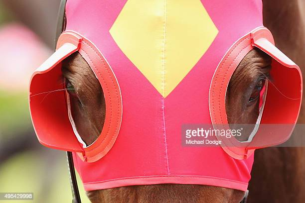 Blinkers are seen on a horse on Melbourne Cup Day at Flemington Racecourse on November 3 2015 in Melbourne Australia
