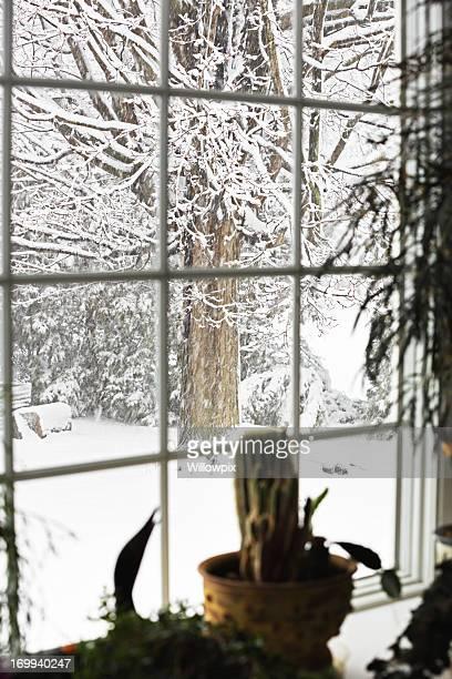 Blizzard Flying Snow Bay Window