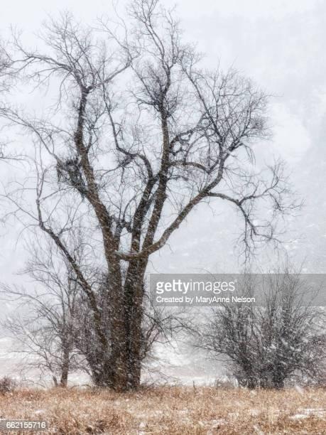 blizzard in valley with trees - mary moody fotografías e imágenes de stock