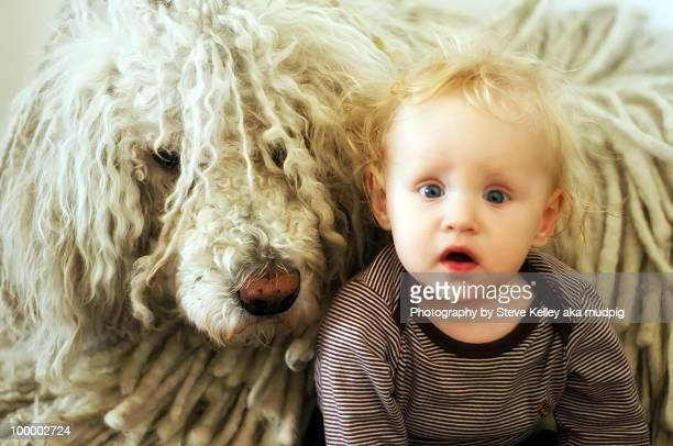 blizzard & nikita blue - trained dog stock pictures, royalty-free photos & images