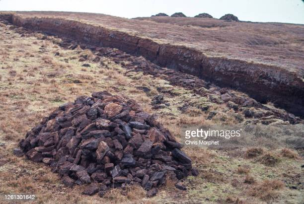 Blocks of peat piled up in a field in the Shetland Islands, June 1970.