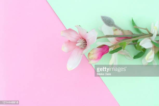 bloem op gekleurde achtergrond - gekleurde achtergrond stock pictures, royalty-free photos & images