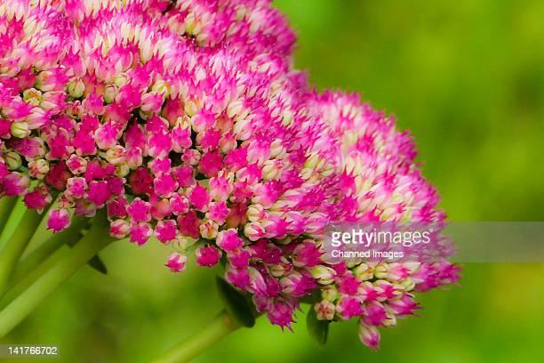 Bloemen flowers in garden