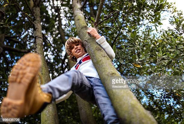 Blond boy climbing on trees