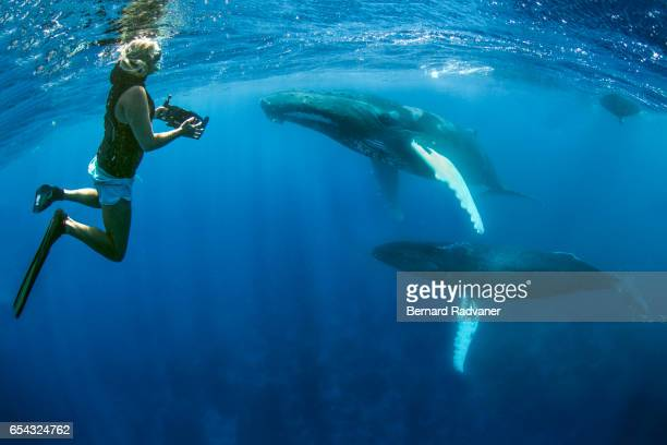 Blond female snorkeler watching and filming two humpback whales