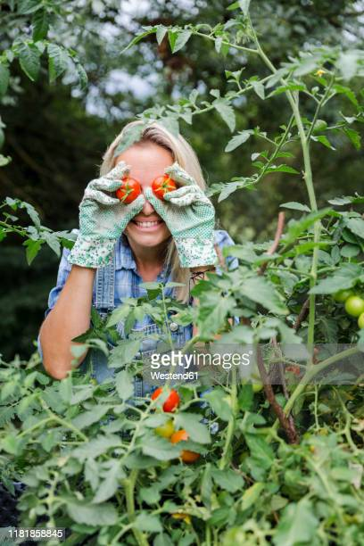 blond smiling woman harvesting tomatoes, tomatoes on eyes - jardinier humour photos et images de collection