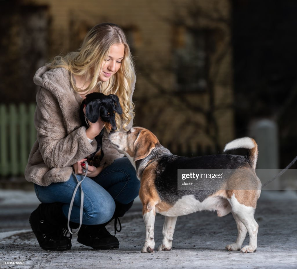 Blonde Smiling Young Woman And Her Dachshund Puppy Meeting Beagle High Res Stock Photo Getty Images
