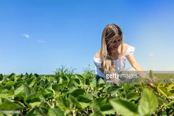 donna bionda sul campo foto d'archivio - fagiolo di soia foto e immagini stock