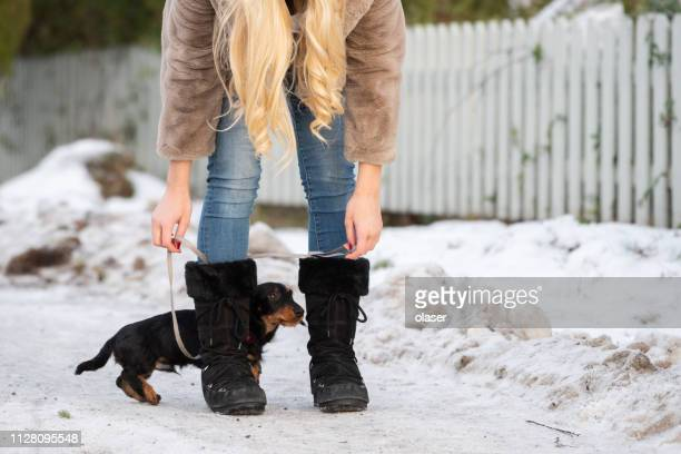 blonde young woman entangled by her dachshund puppy - dog knotted in woman stock pictures, royalty-free photos & images