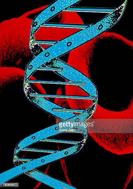 blood cells and dna strand - platelet stock pictures, royalty-free photos & images
