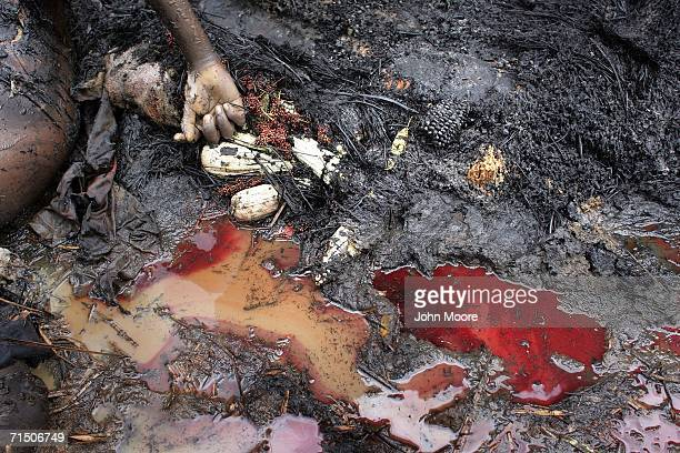 Blood pools are seen next to a charred body on the outskirts of the Gety camp for displaced people July 23 2006 in the Ituri district of the...