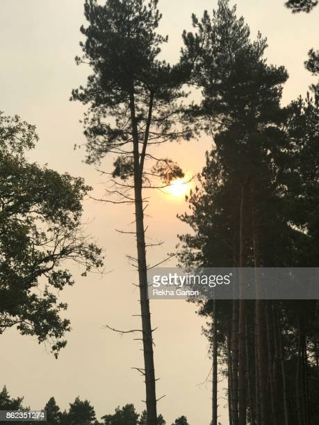 blood red sun - rekha garton stock pictures, royalty-free photos & images