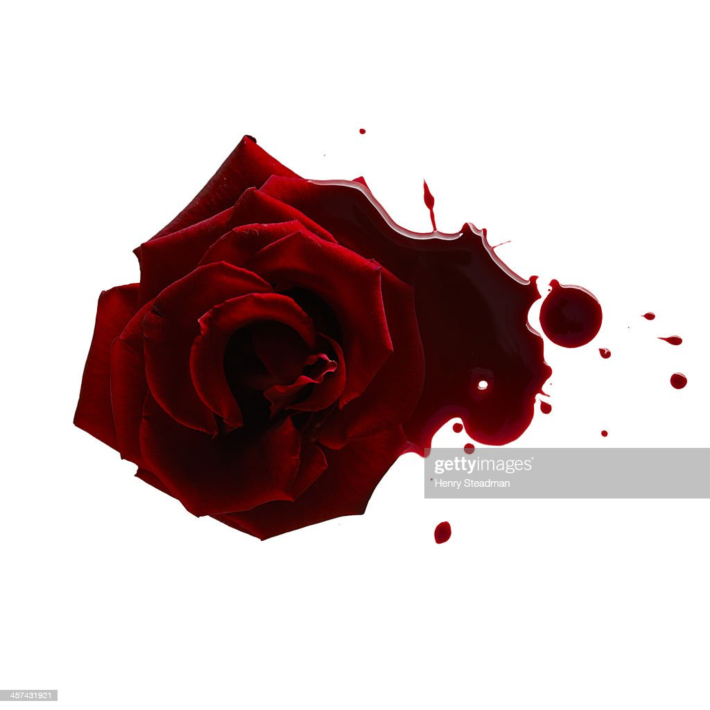 Blood Rose High Res Stock Photo Getty Images